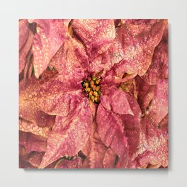 Red Spotted Pointsettia Metal Print
