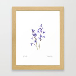 Bluebells Framed Art Print