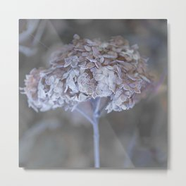 Frost Petals Of Hydrangea #decor buyart #society6 Metal Print