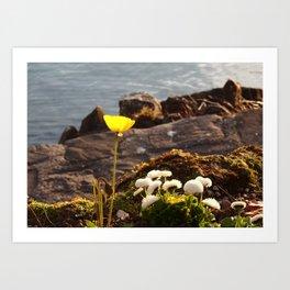 Lakeside Flowers II Art Print