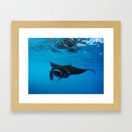 Manta Framed Art Print