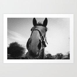 Horse from Ireland Art Print