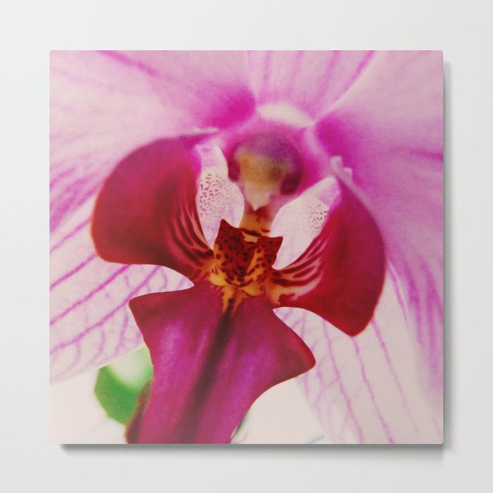 Close up Orchid #2 Metal Print