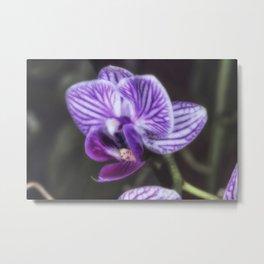 Soft Purple orchid flower Metal Print