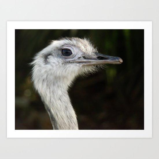 Ostrich, Bird Art Print