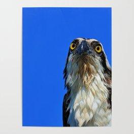 Morning Osprey Poster