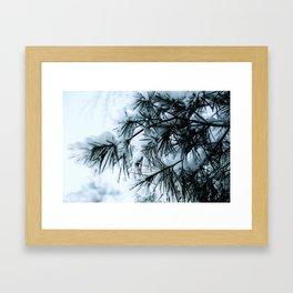 Snow Laden Pine - A Winter Image Framed Art Print