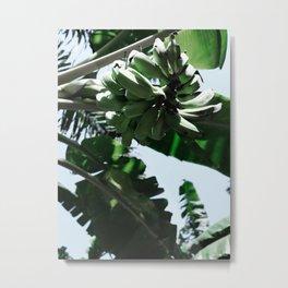 Wild Bananas Metal Print