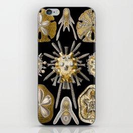 Ernst Haeckel Echinidea Sea Urchin iPhone Skin