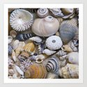 Sea Shell Collection by lebensartphotography