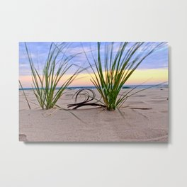 Curly Driftwood Metal Print