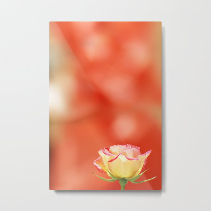 LITTLE YELLOW ROSE Metal Print