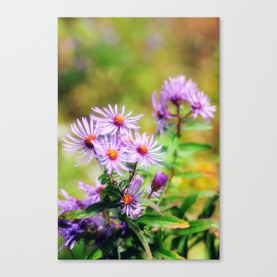 Purple Aster Canvas Print