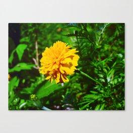 Goldquelle Coneflower Canvas Print