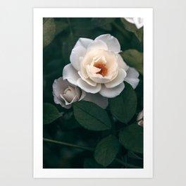 Late Autumn Rose #6 Art Print