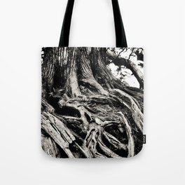 Beauty in the old Tote Bag