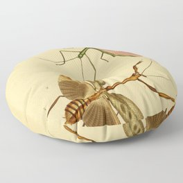 Naturalist Stick Bugs Floor Pillow