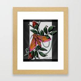 Hawk Moth Roses Framed Art Print