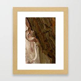 Autumn Bark Framed Art Print