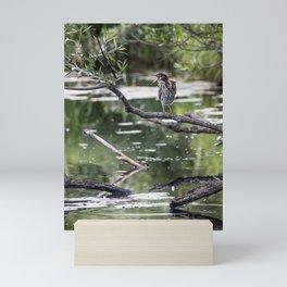 Green Heron in Channel Mini Art Print