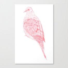 Turtle Dove Canvas Print