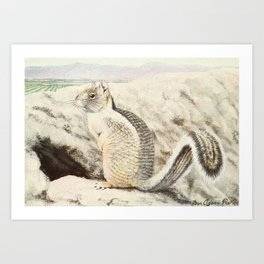 Fuertes,Louis Agassiz(1874-1927)-Burgess Animal Book forChildren 1920 (California Ground Sq Art Print