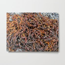 Orange Seaweed on the Beach Metal Print