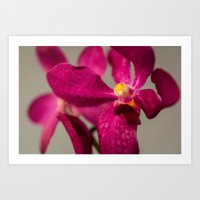 orchid Art Prints featuring Orchid by Michelle McConnell