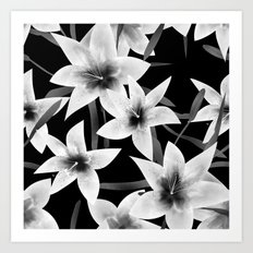 White lilies on a black background . Art Print