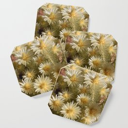 Fynbos Treasures Coaster