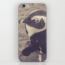 Adorable African Penguin Series 2 of 4 iPhone Skin