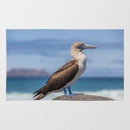 Galapagos blue footed booby bird photography Rug