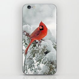 Cardinal on a Snowy Branch iPhone Skin