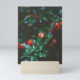 Pomegranate Study, No. 1 Mini Art Print
