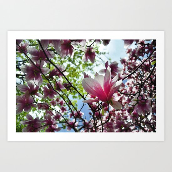 Magnolia Bliss Art Print