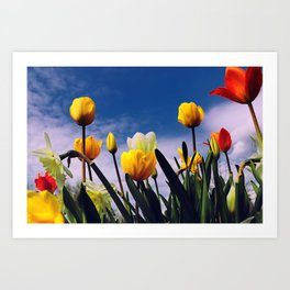Relax With The Tulips Art Print