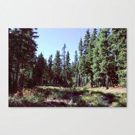 Sahalie Falls Trail Canvas Print