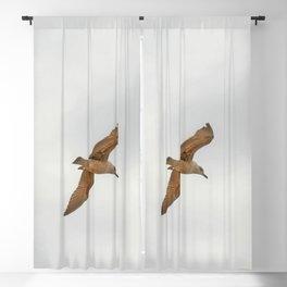 Seagull bird flying Blackout Curtain
