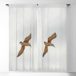 Seagull bird flying Blackout Curtain