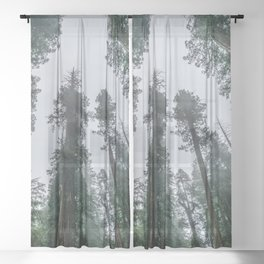 Redwood Forest Adventure IV - Nature Photography Sheer Curtain
