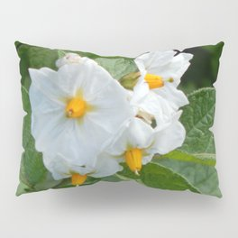 Potato Plant Flowers Pillow Sham