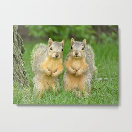 Squirrels-Brothers Metal Print