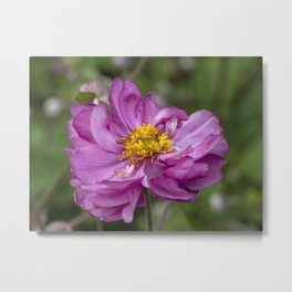 Autumn Anemone Metal Print
