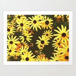 black eyed susan flowers Art Print