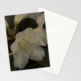 Stamen Stationery Cards