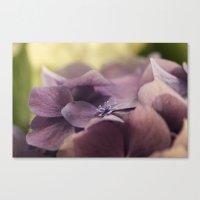 hydrangea Canvas Prints featuring Hydrangea by Deborah Janke
