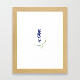 Lavender Flower Framed Art Print
