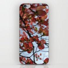 Pink Dogwood iPhone & iPod Skin