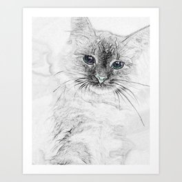 Siberian Kitty Cat Laying on the Marble Slab Art Print