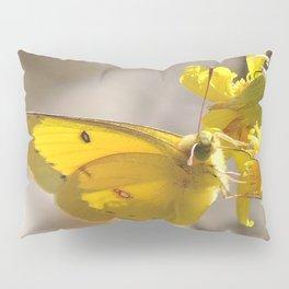 Sulphur Butterfly Imbibing Pillow Sham